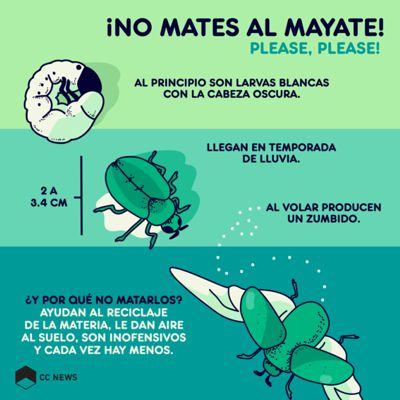 Graphics with the life cycle of mayate